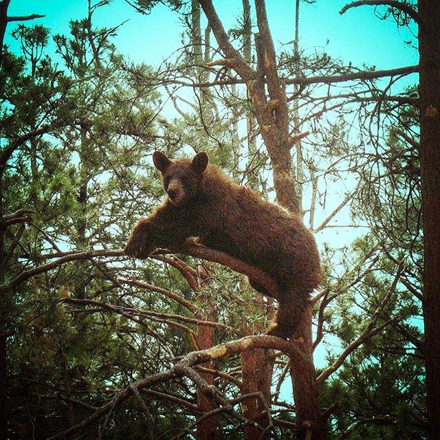 Brown Bear Enhancement Photo