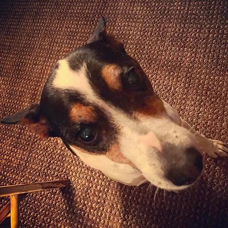Boonie the rugby wonder-dog